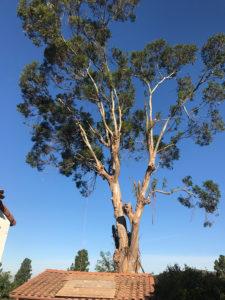Tree Maint 1