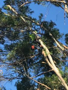 Tree Maint 2