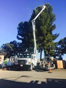 Tree Maint 5
